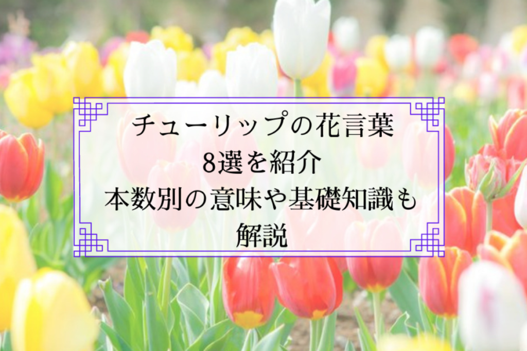 チューリップの花言葉8選を紹介|本数別の意味や基礎知識も解説